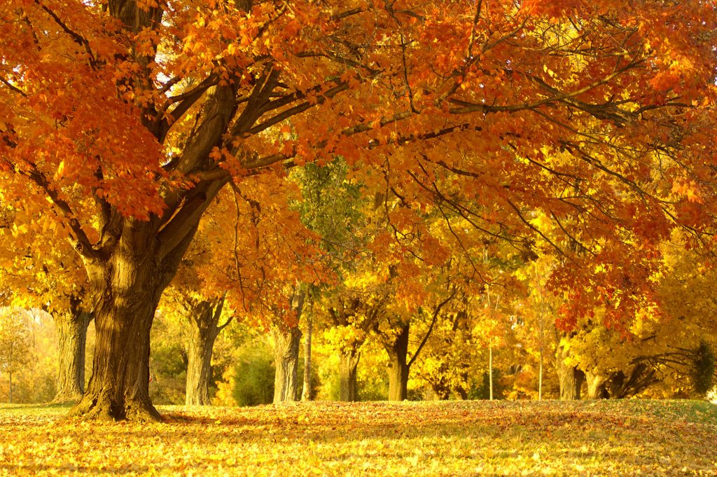 autumn scene nature wallpaper hd download